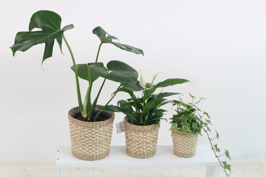 家具だけではなく観葉植物も重要