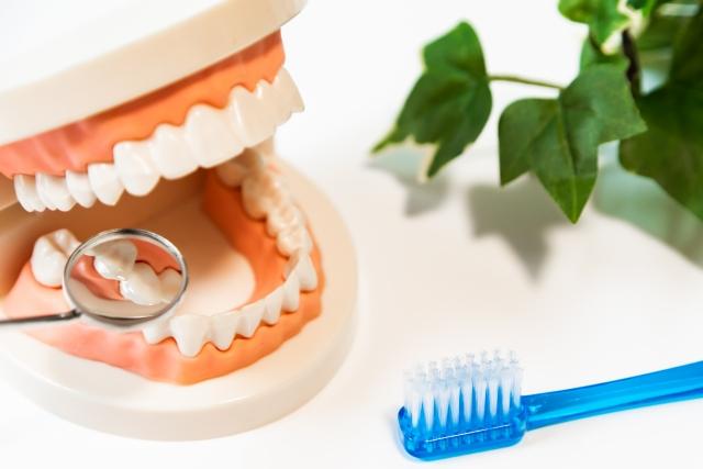 診療科目:歯科の場合