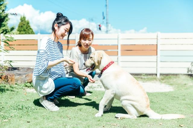 動物カフェの種類②犬カフェ