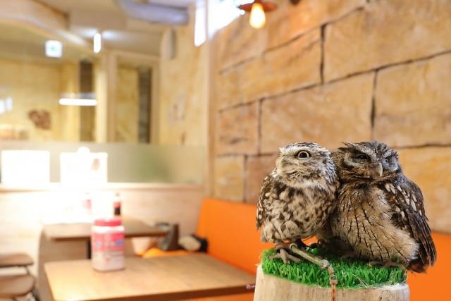 動物カフェの開業に必要な許可とは