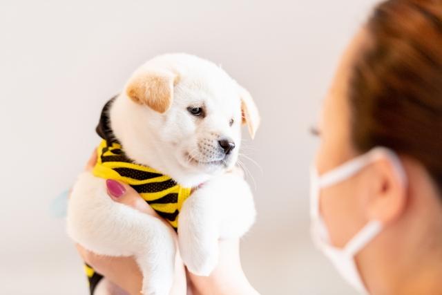 動物カフェの開業に必須なこと④必ず1人、動物取扱責任者を選定する