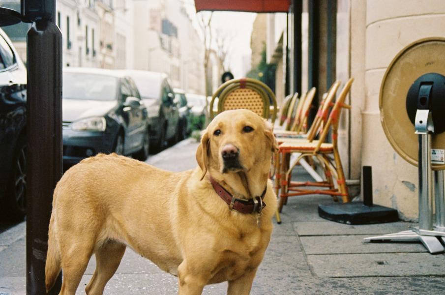 """ペット同伴のペットとは、主に""""犬""""を指すことが多い"""